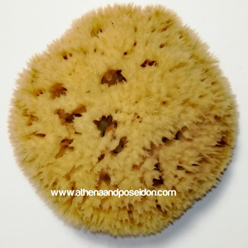 Premium Honeycomb Natural Sea Sponge from Kalymnos - Greece 5-5.5 inches ( 12.7-13.97cm)