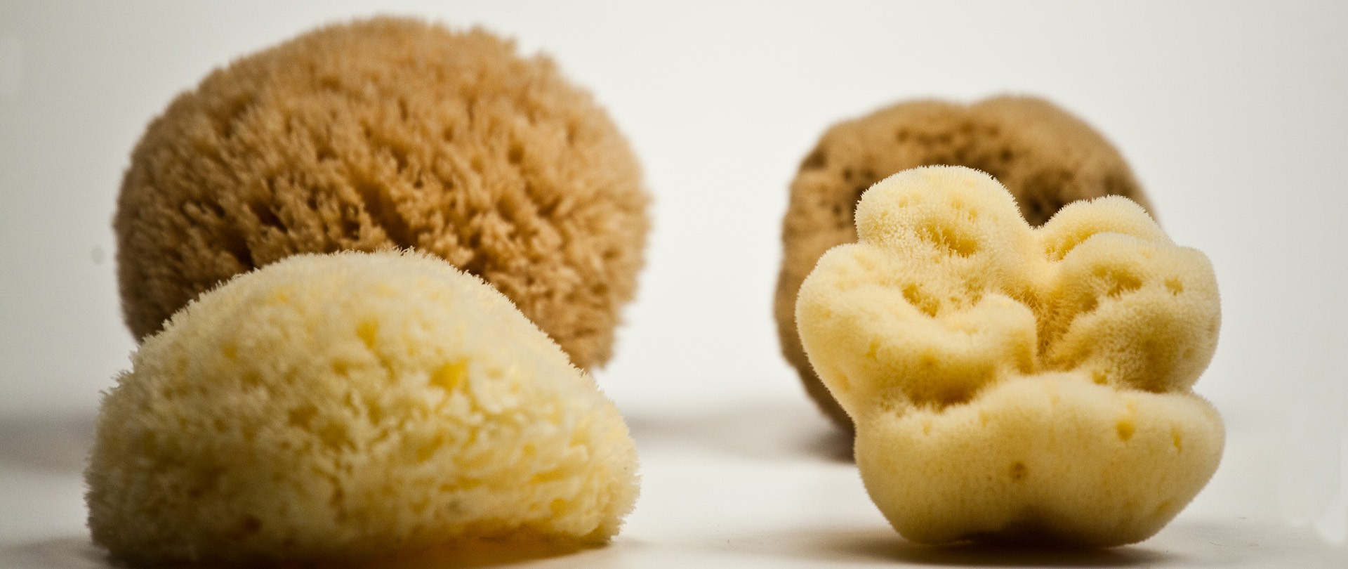 Natural Sea Sponges From Greece